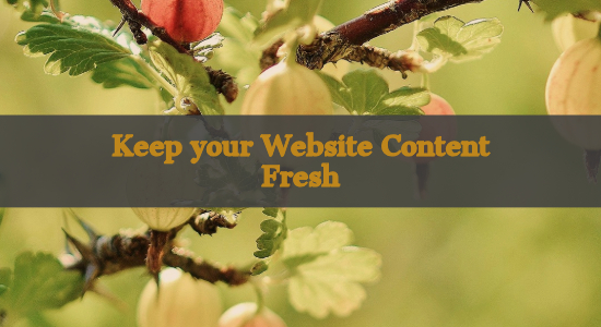 keep your your website content fresh